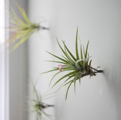 jardin en pared