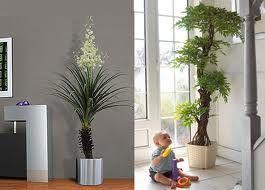 plantas y flores decorativas
