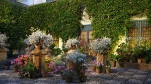 plantas y flores, naturaleza pura